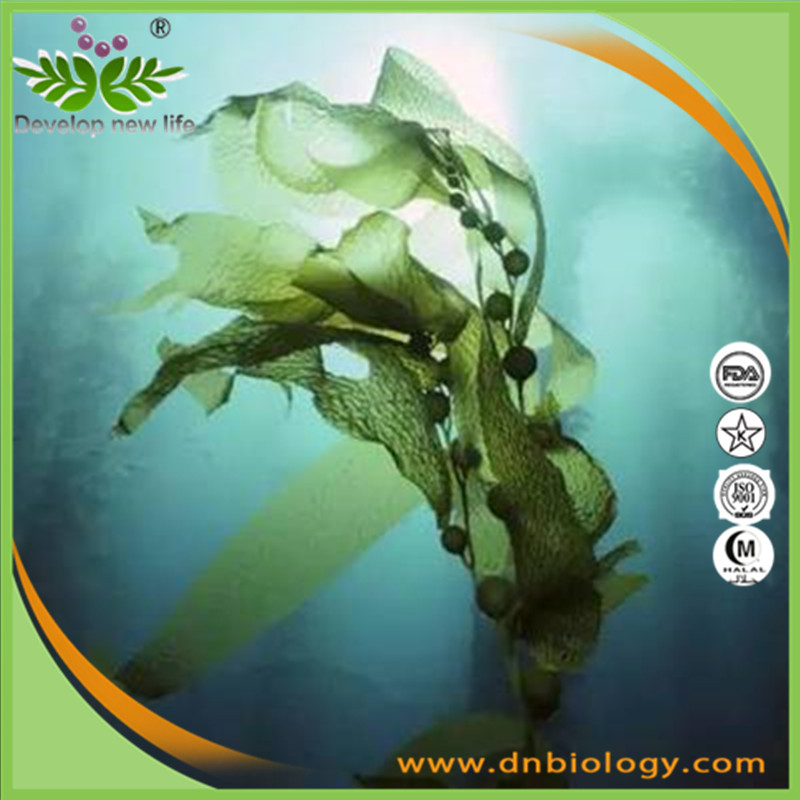 High quality Bladderwrack Powder 10:1 for Controlling the expansion of cell of cancer