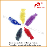 Natural Turkey Feather For Sale