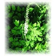 Black Cohosh P.E. with direct price from Factory