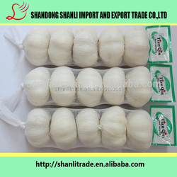 the most popular china fresh white garlic for sale