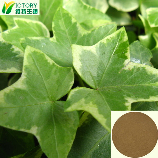 2014 wholesale 100% natural dried ivy leaf extract