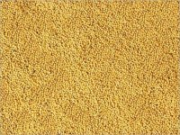 yellow mustard and black mustard seeds from ukraine