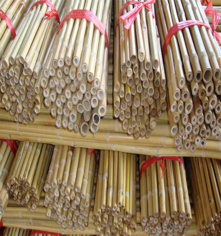 Wy-J045 bamboo poles for tree supporting