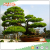 /product-detail/16-tall-25-wide-artificial-indoor-cedar-bonsai-tree-topiary-artificial-pine-tree-for-decoration-60449120681.html
