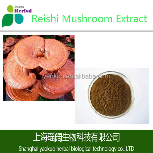 Top Quality Natural Reishi Mushroom Extract