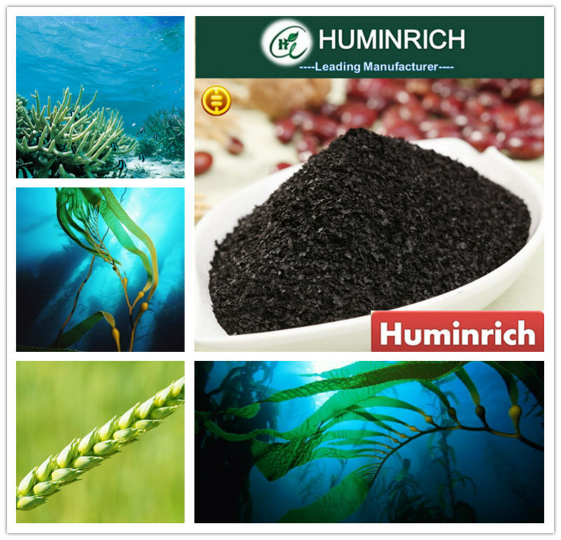 Huminrich Shenyang 15% Seaweed Extract brown alga powder