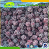 Passed HALAL Organic cheap frozen fruits blackberry from china for export