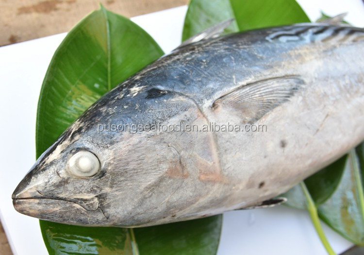 thailand export big tuna wild catched Fish with Factory price