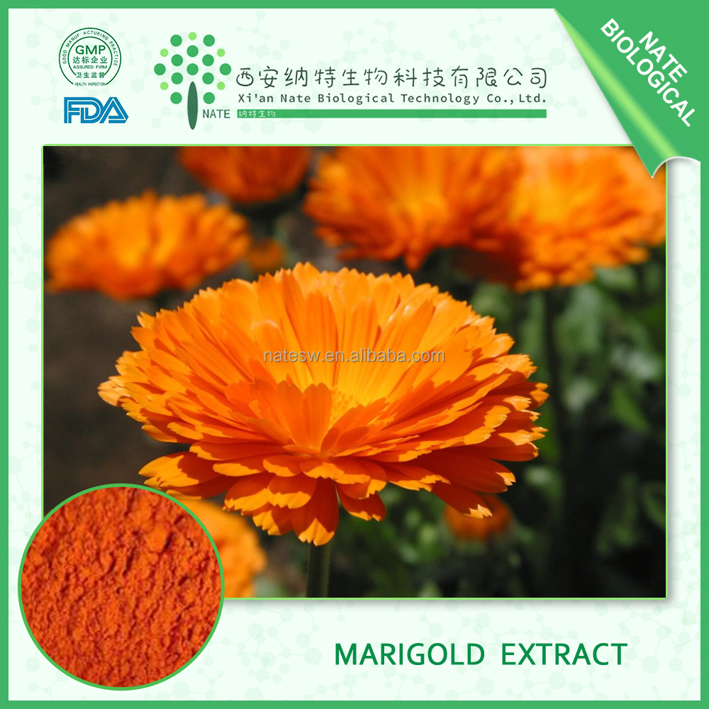 Hot Sales products natural Marigold Extract 10% by HPLC