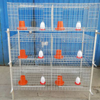 broiler battery layer cage hen system for chicken