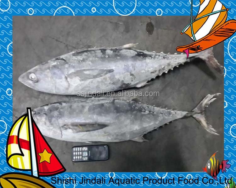 2016 new arrive Frozen Yellow Fin Tuna 3kg whole round seafood