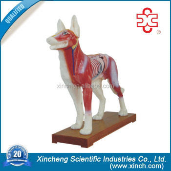 DOG ACUPUNCTURE MODEL