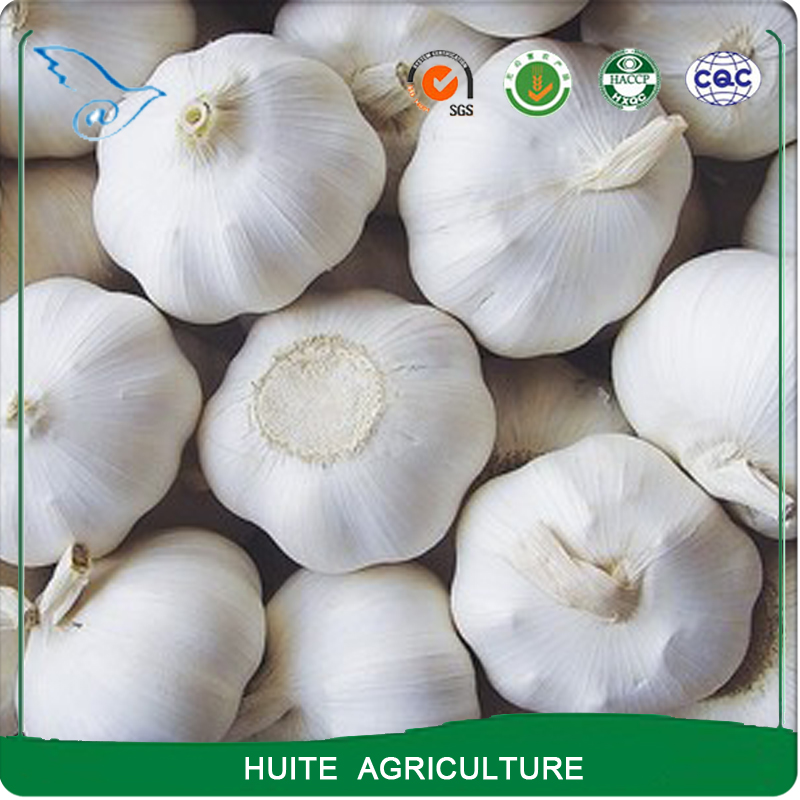 Natural organic fresh white garlic price export from China