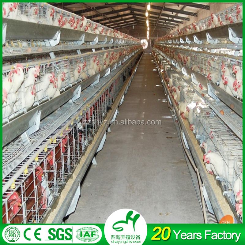 China Supplier 100% pp Plastic Broiler Rearing 10000 Layer Chickens Farm Bird Cage For Sale