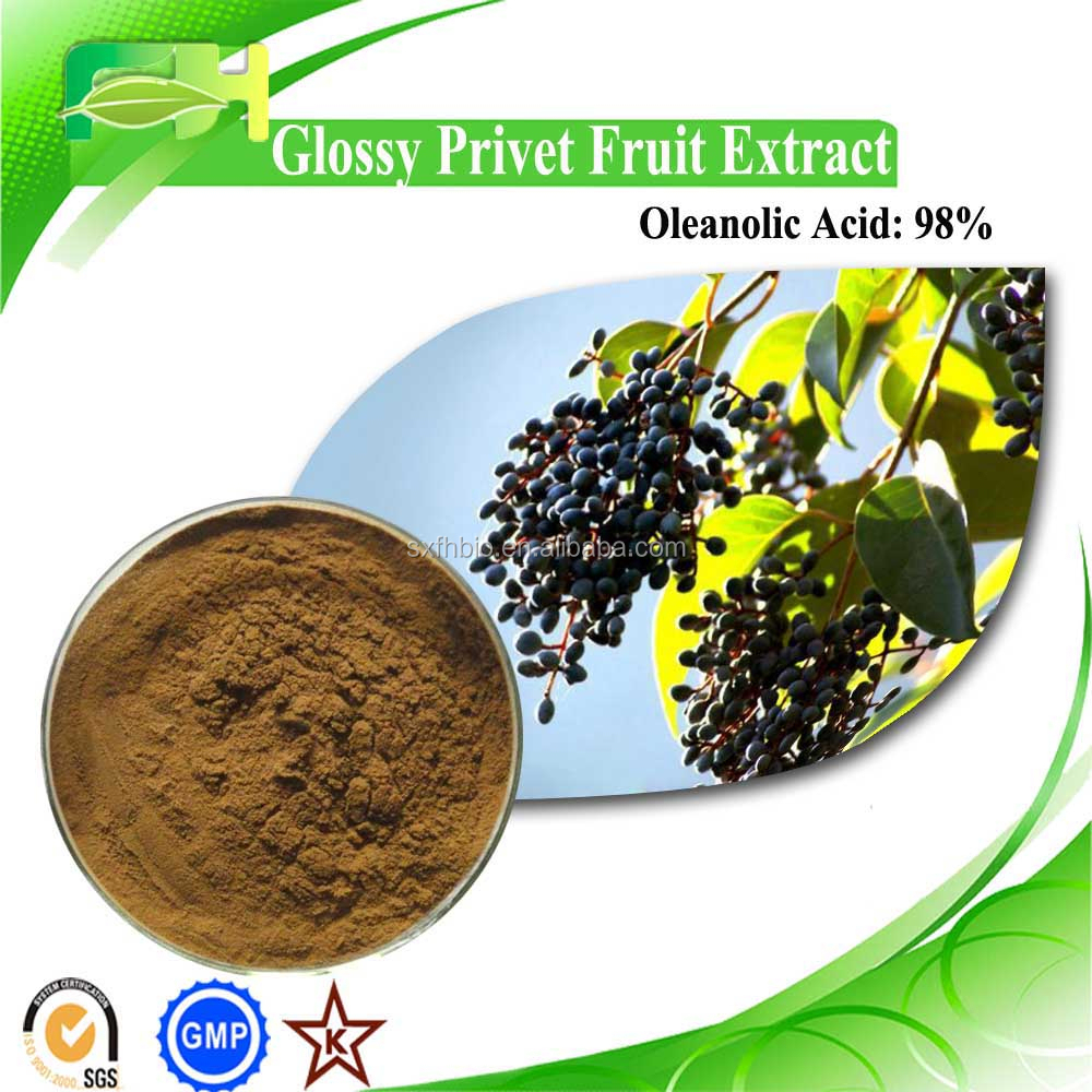 Food Additive Fruit Of Glossy Privet, 98% Oleanolic Acid, Ligustrum lucidum Ait P.E