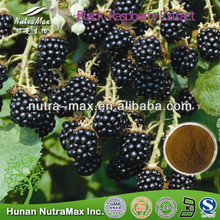 Natural Black Raspberry Extract,Black Raspberry Extract Powder,Black Raspberry Extract Rasbperry Ketone 4%--NutraMax Supplier