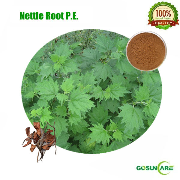 Natural 1.5% Beta-sitosterol and 1.2% Flavones Nettle Root P.E.
