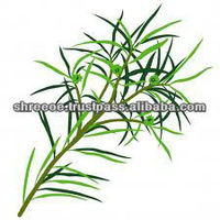 Tea Tree Oil Pure & Best Quality