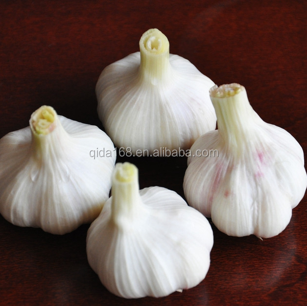 Fresh pure white garlic with good quality