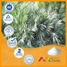 Sabal palmetto Fruit Extract/Saw palmetto P.E