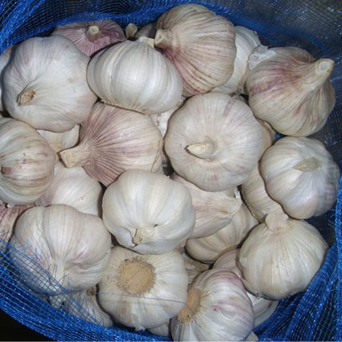 China fresh organic white garlic