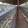 Poultry Battery cage ( including agenct contact address )