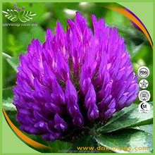 Red clover powder/Pure 40% isoflavones Red clover extract/Red clover extract powder