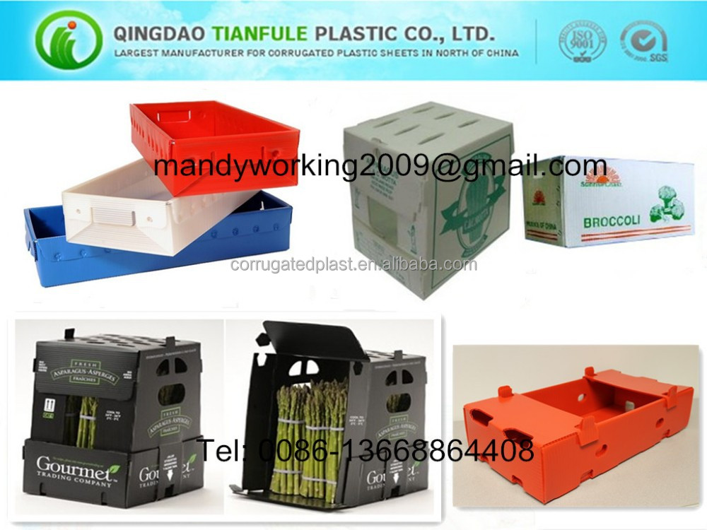 Stackable PP corrugated plastic box for asparagus packaging