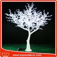 Manufacturer white birch trees for sale