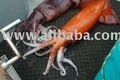 giant squid whole
