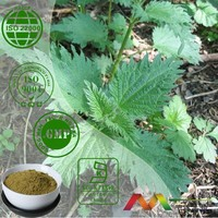 Best selling health products Nettle Extract powder