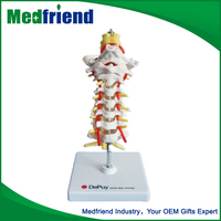 MFM008 Beautiful Hot Sale Plastic Spine Model