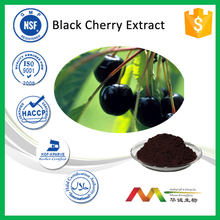 100% natural Black Cherry Extract/Black Cherry Extract Powder