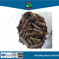 Pet Products Animal food Freeze Dried Cricket