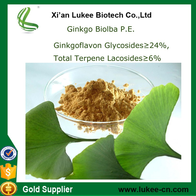 Ginkgo biloba extract supplier / biloba ginkgo Powder Extract Flavone 24%+Lactones 6%, Ginkgolic Acid 5ppm