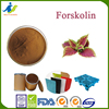 weight loss slimming Coleus forskolin extracts, forskolin 10%,20%