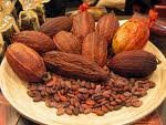 CACAO BEANS FROM THE BEST PRODUCER IN THE WORLD, ECUADOR