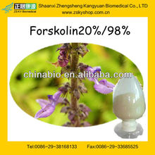 GMP Certified Manufacturer Supply Coleus Coleus Forskohlii Extract 20%