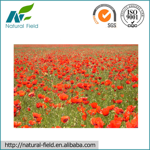 100% nature safflower extract with high quality