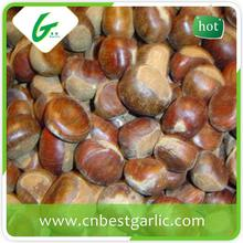 High sale no pollution bulk fresh frozen chestnuts with factory price