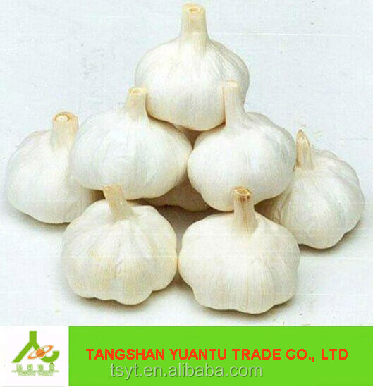 private label best quality normal white snow white 5cm malaysia australia indonesia Pakistan wholesale fresh garlic