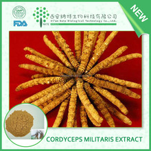 china pure Herb Medicine 80% cordyceps sinensis extract powder and cordyceps-lingzhi extract
