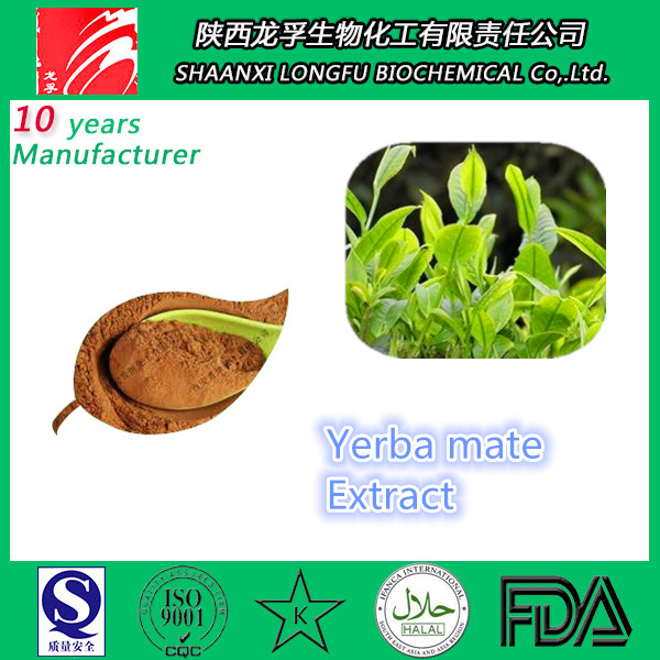 Manufacturer supply Yerba mate extract powder