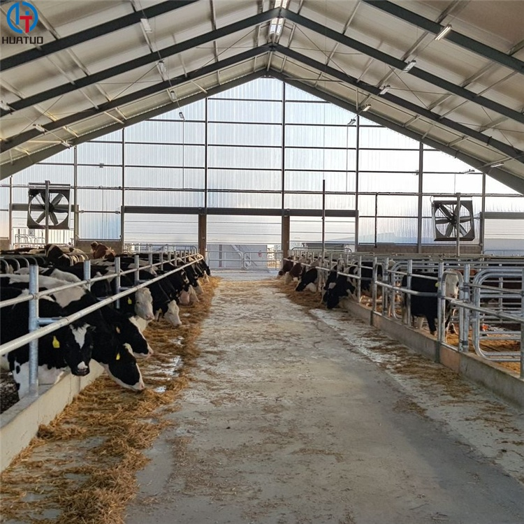 Wholesale Steel Frame Chicken Poultry House Farm Designs cow shed For Broiler Steel Frame Cow House