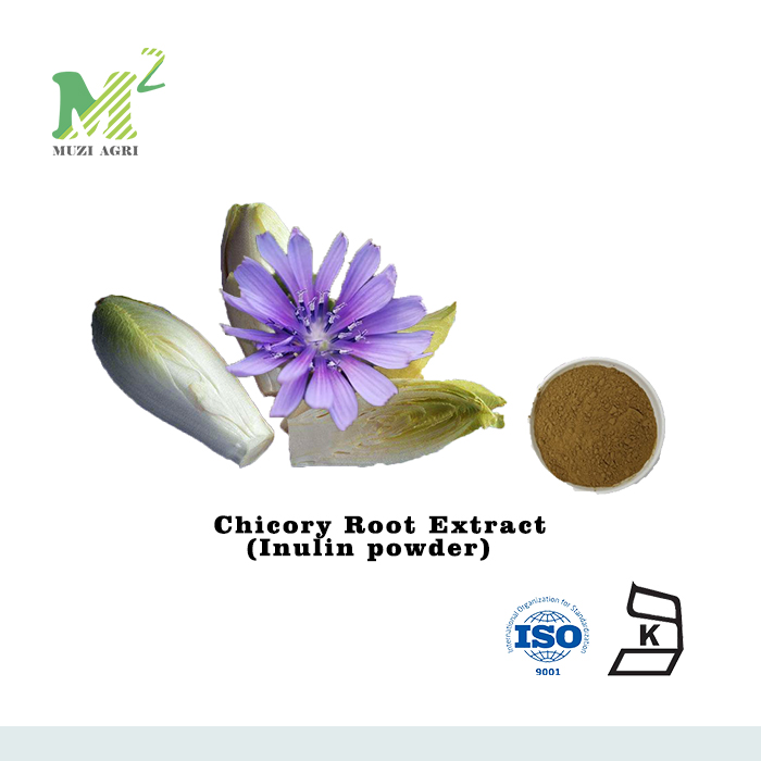 natural Organic Cichorium Intybus Extract inulin 90% synanthrin