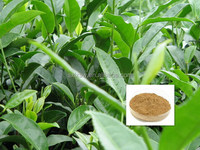 Export high quality new coming competitive price green tea extract