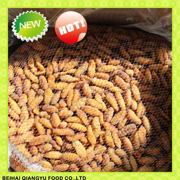 2016 Health and tasty insect food frozen silkworm pupae for Thailand market