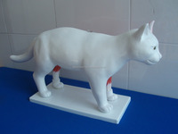 The Cat Acupuncture Domotration Model