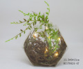 Garden type hand made succulent plants with LED light in glass pot