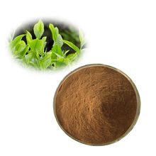 High Quality Pure Natural Yerba Mate Extract
